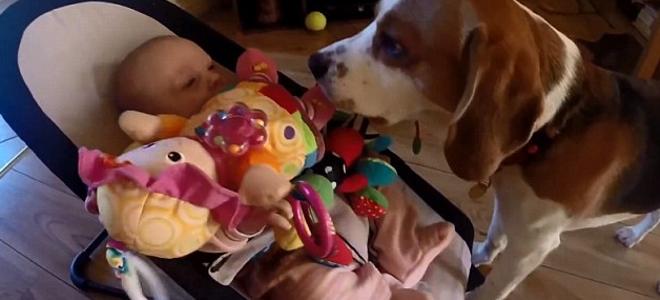 perierga.gr - Σκύλος φέρνει στο μωρό όλα τα παιχνίδια για να σταματήσει το κλάμα! (βίντεο)