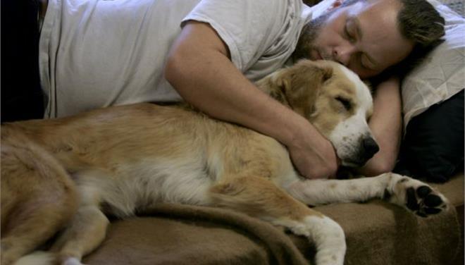 perierga.gr - Και τα σκυλιά ζηλεύουν, λένε οι επιστήμονες!