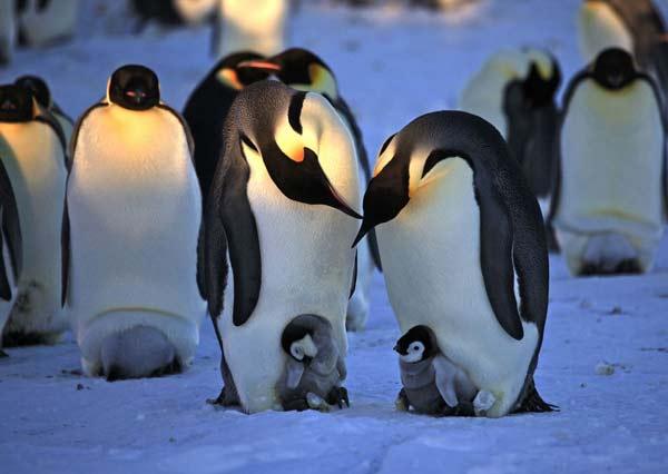 perierga.gr - 10+1 ζώα που αγαπούν το ταίρι τους για πάντα!