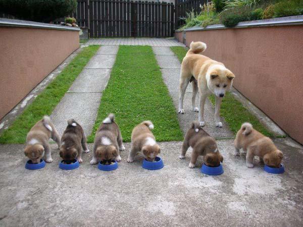 perierga.gr - Mανούλες με τα μωρά τους από το ζωικό βασίλειο θα σας κλέψουν την καρδιά!