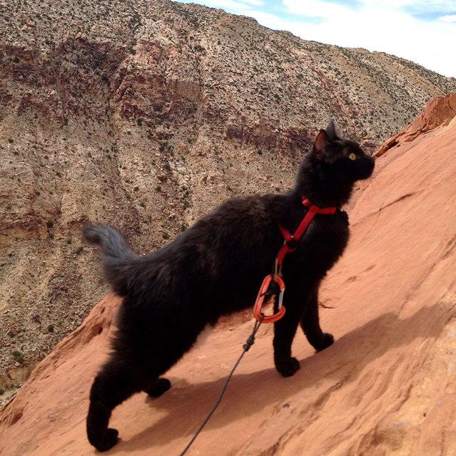 perierga.gr - Γάτα, άριστος ορειβάτης!