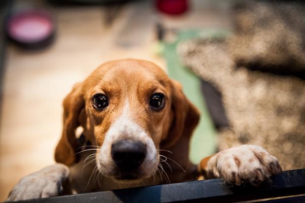 perierga.gr - Σκυλιά βλέπουν το φως της μέρας για πρώτη φορά (βίντεο)