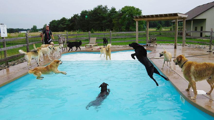 perierga.gr - Σκυλιά απολαμβάνουν βουτιές σε πισίνα!