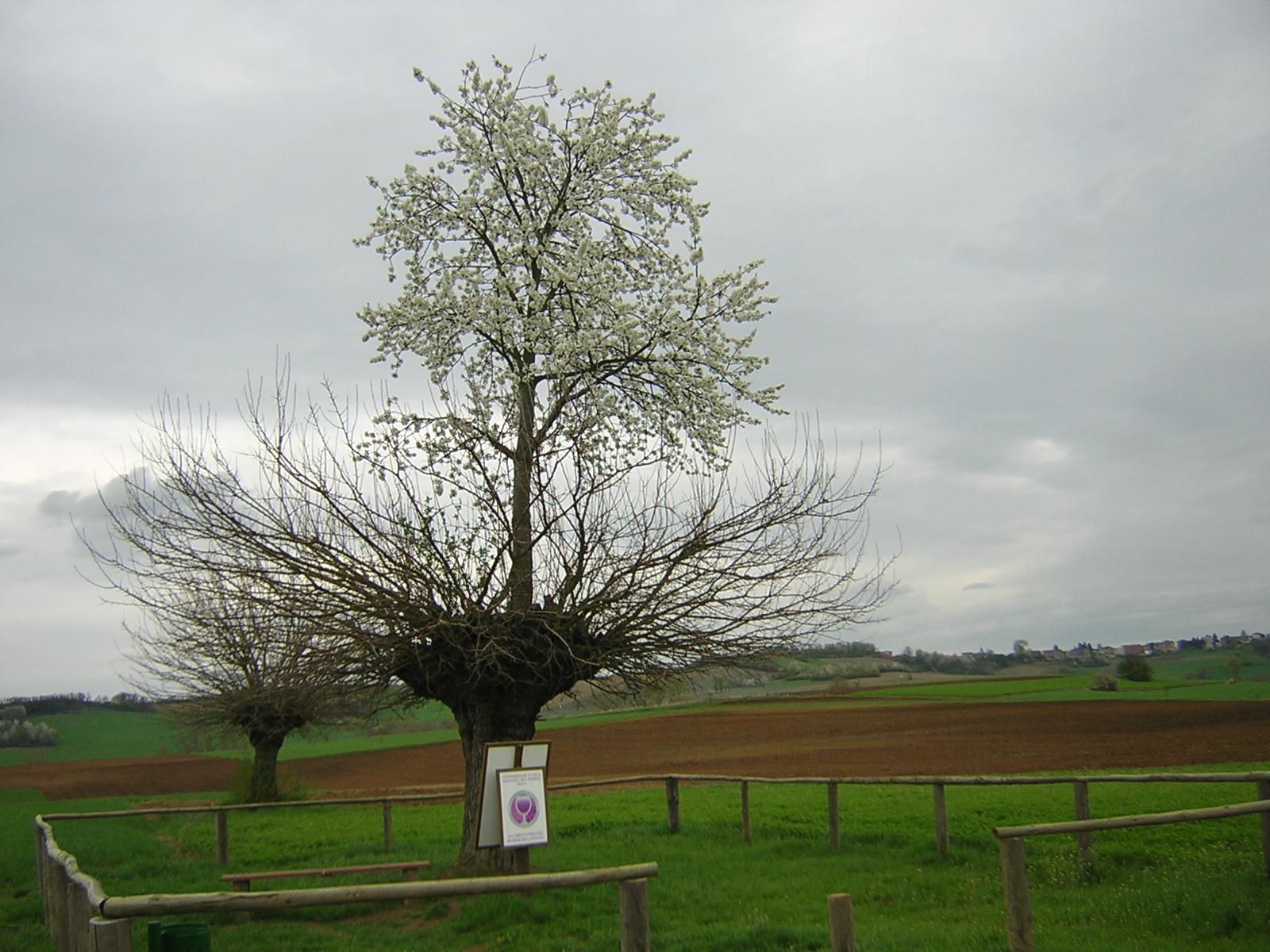 perierga.gr - Παράξενο διπλό δέντρο!