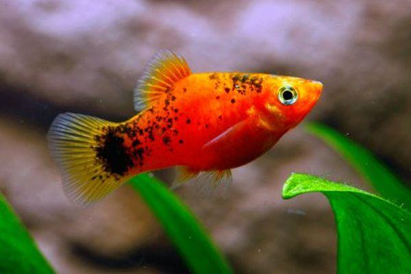 Perierga.gr - Τα ψάρια έχουν... καλή μνήμη