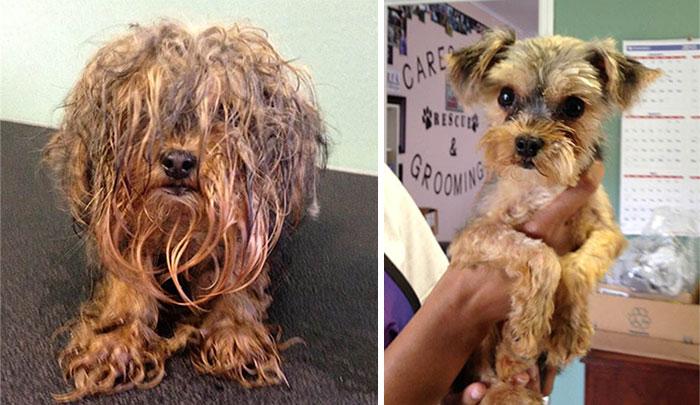 perierga.gr - Η ολοκληρωτική μεταμόρφωση αδέσποτων σκύλων!