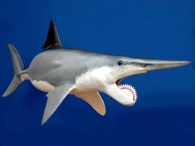 perierga.gr - 10 ζώα με τρομακτικά δόντια!