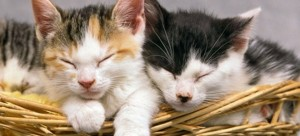 perierga.gr - Τράπεζα μαζί με το δάνειο δίνει δώρο μια... γάτα! (βίντεο)
