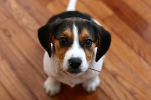 perierga.gr - Απίστευτη φάρσα σε σκύλους! (βίντεο)
