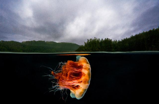 perierga.gr - Η ομορφιά κάτω από την παγωμένη θάλασσα!