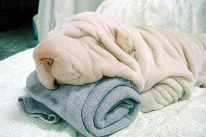 perierga.gr - Σκυλιά που μοιάζουν με… κάτι άλλο!