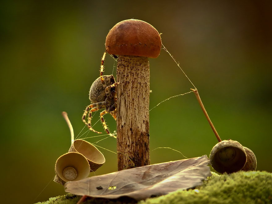 perierga.gr - Ο μαγικός κόσμος των μανιταριών!