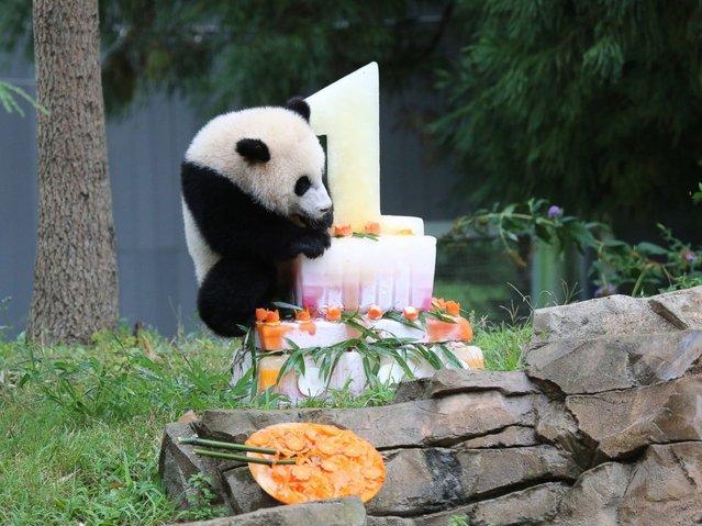 perierga.gr - Τα πρώτα γενέθλια ενός πάντα στο Πάρκο!