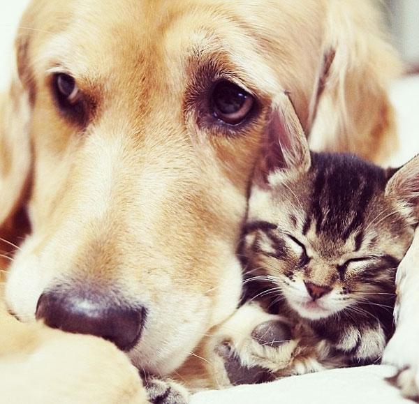 perierga.gr - Ponzu: Ο μπαμπάς των γατών!