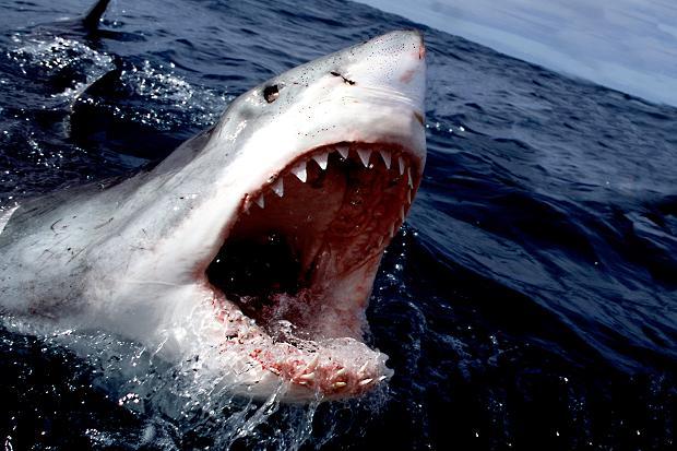 perierga.gr - Οι καρχαρίες προτιμούν να τρώνε άντρες!