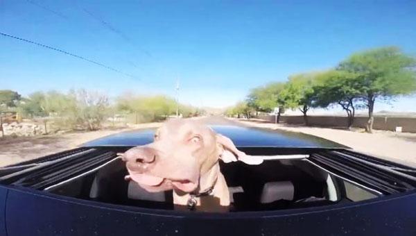 perierga.gr - Διασκεδαστική βόλτα σκύλου με κάμπριο! (βίντεο)