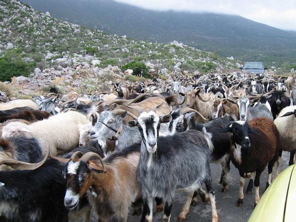 perierga.gr - Εντυπωσιακές αγέλες ζώων σε ξηρά και θάλασσα!