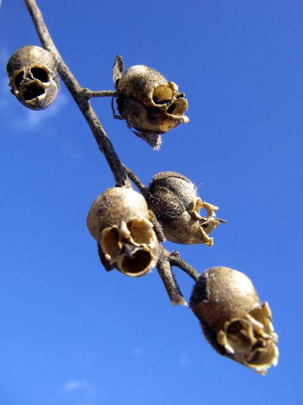 perierga.gr - 10 παράξενα φυτά που θυμίζουν ανθρώπινα όργανα!