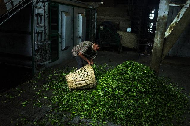 perierga.gr - Το ακριβότερο τσάι στον κόσμο!