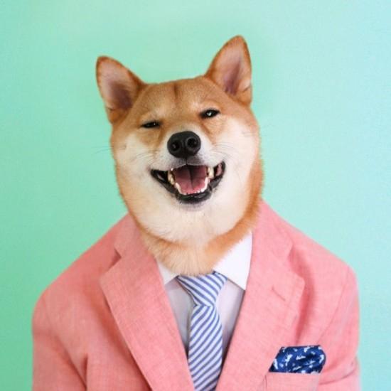 perierga.gr - Σκύλος ποζάρει για εταιρεία αντρικών ρούχων!