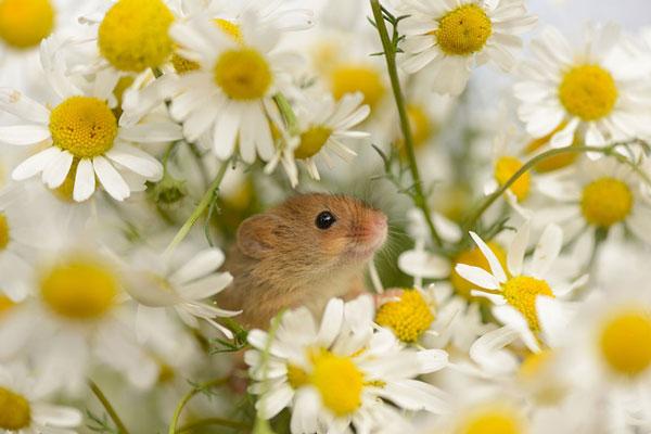 perierga.gr - Γλυκύτατα ποντικάκια στη φύση!
