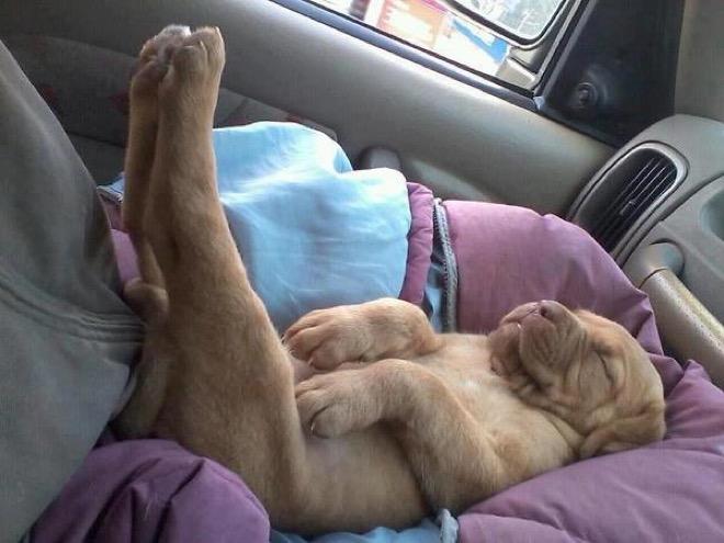 perierga.gr - Σκυλιά που απολαμβάνουν τον ύπνο τους!