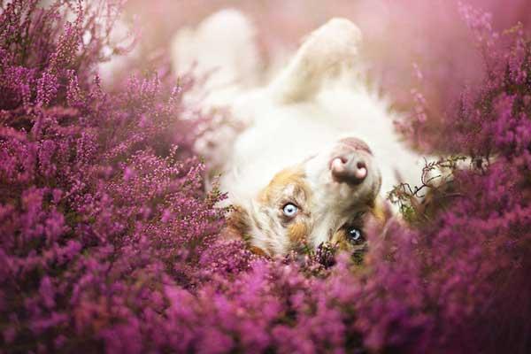 perierga.gr - Σκυλιά φωτογραφίζονται στη φύση με στυλ!
