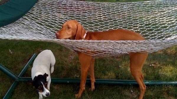 "perierga.gr - Σκυλιά που ""κόλλησαν"" σε διάφορα αντικείμενα!"