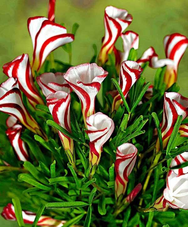 Ασυνήθιστα λουλούδια!