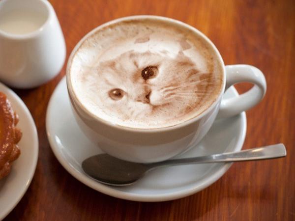perierga.gr - Γάτες στο... αφρόγαλα!