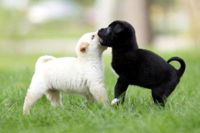 perierga.gr - Τα μικρότερα κουτάβια είναι τα πιο γλυκά!