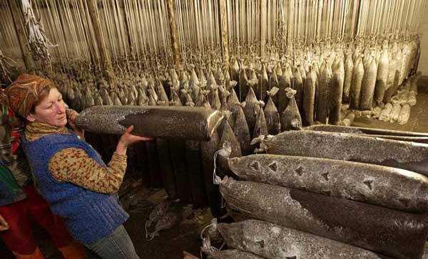 perierga.gr - Καλλιέργεια μανιταριών σε πρώην σοβιετική βάση πυραύλων!
