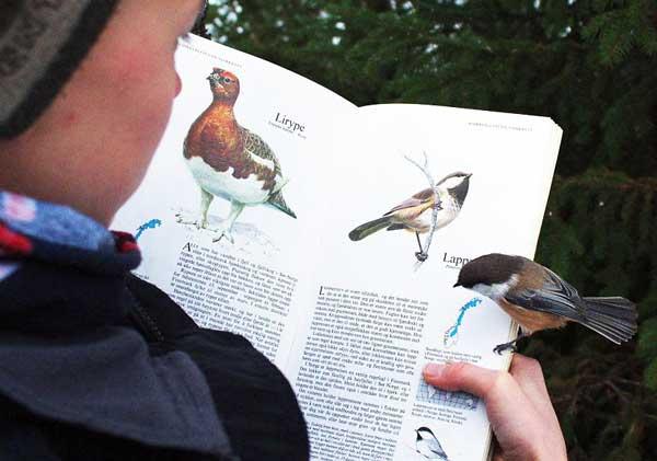 perierga.gr - Πουλάκι προσγειώνεται σε σελίδα βιβλίου που το περιγράφει!