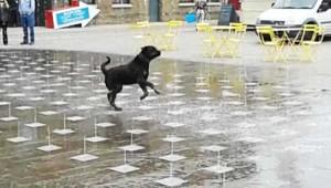 perierga.gr - Σκυλί παίζει με το... σιντριβάνι!