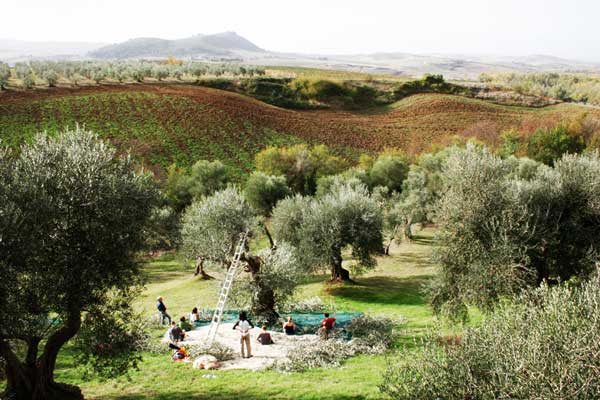 perierga.gr - Συγκομιδές του φθινοπώρου από όλον τον κόσμο!
