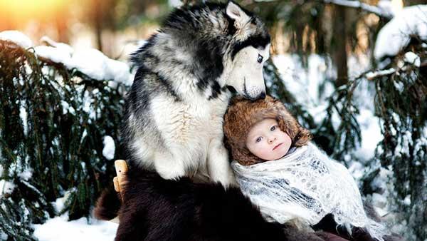 perierga.gr - Μεγάλα σκυλιά φροντίζουν μικρά παιδιά!