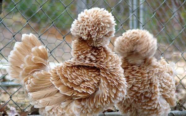 perierga.gr - 20 ζώα με εντυπωσιακό τρίχωμα!