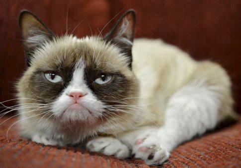 Perierga.gr - Η «κατσούφα γάτα» έκανε πλουσιότερο τον άνθρωπό της κατά 81 εκατ. ευρώ