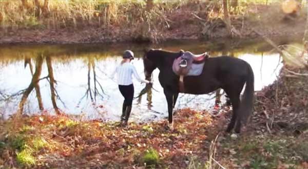 perierga.gr - Άλογο αγγίζει για πρώτη φορά το... νερό!