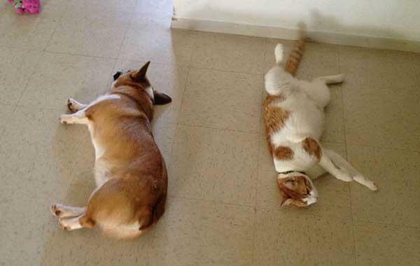 perierga.gr - Οι γάτες και οι σκύλοι δεν είναι (τελικά) εχθροί!