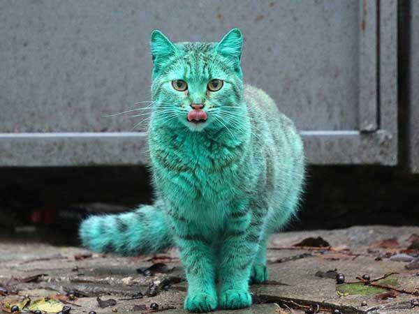 perierga.gr - Η παράξενη πράσινη γάτα της Βουλγαρίας!