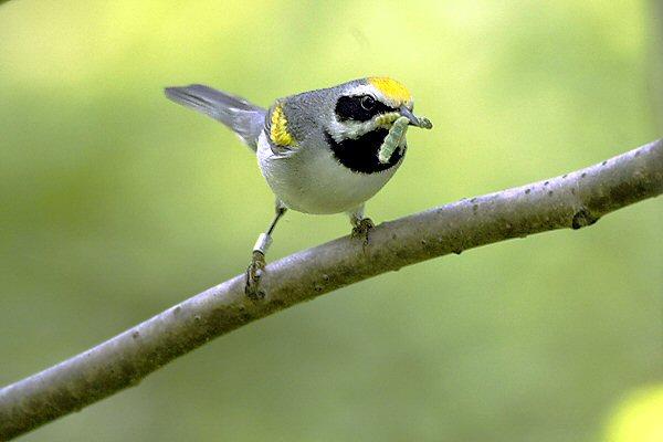 perierga.gr - Τα πουλιά «προαισθάνονται τις καταιγίδες»!