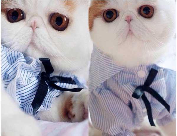 perierga.gr - Ζώα ντύνονται με στυλ!