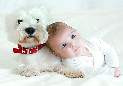 Σκυλάκι προστατεύει μωρό από την... ηλεκτρική σκούπα!