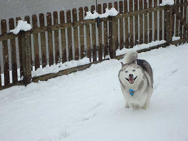 perierga.gr - Ζωάκια παίζουν για πρώτη φορά στο χιόνι!
