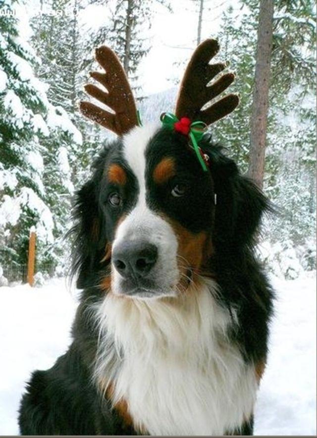 perierga.gr - Πανέμορφα ζωάκια... ντυμένα χριστουγεννιάτικα!