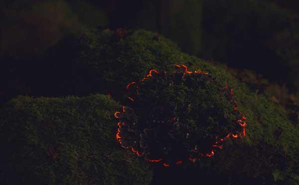 perierga.gr - Πλάσματα φωσφορίζουν το βράδυ στο δάσος!