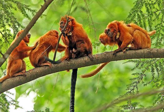 perierga.gr - 10 απειλούμενα δάση στον κόσμο!