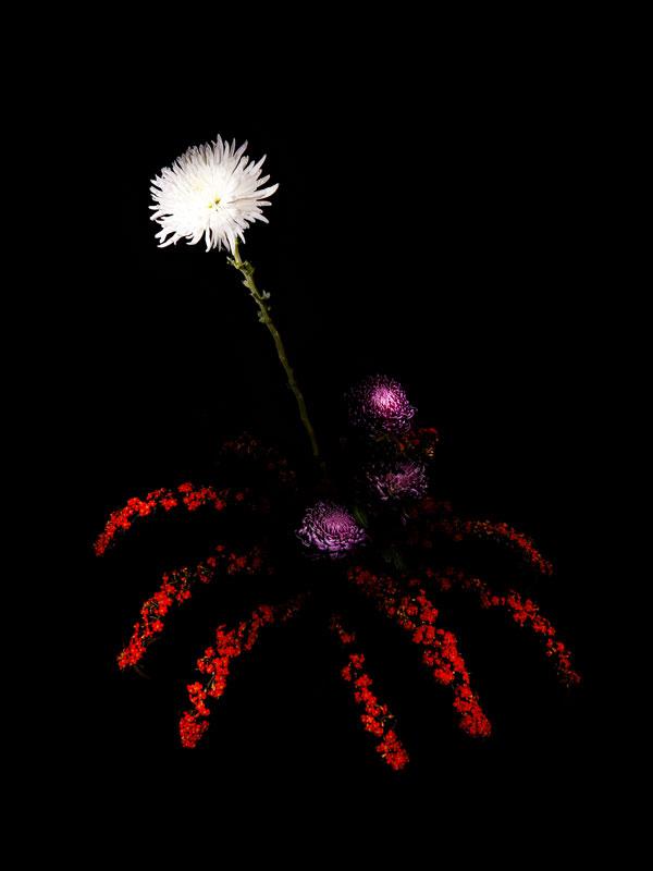 perierga.gr - Λουλούδια σαν... πυροτεχνήματα!