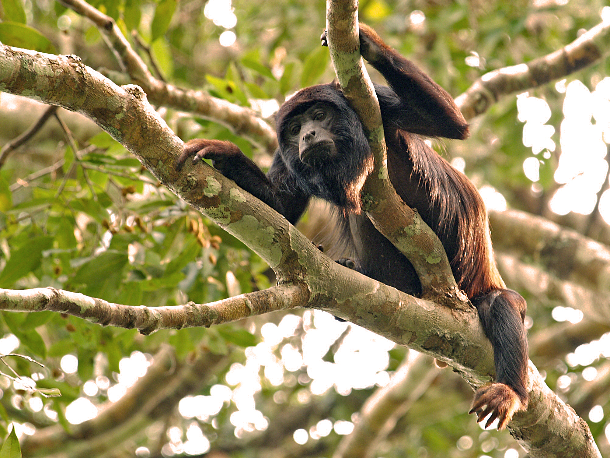perierga.gr - Τα πιο θορυβώδη... ζώα στον κόσμο!